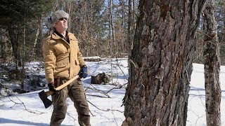 Felling a Huge Maple Tree with an Axe, Milling Lumber with Granberg Alaskan Chainsaw Mill, Husqvarna