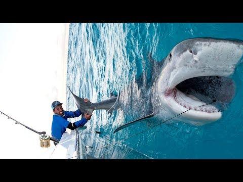 Xxx Mp4 Massive 1000lb Tiger Shark Caught While Bottom Fishing In The Bahamas 4K 3gp Sex