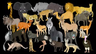 African Animals - The Kids