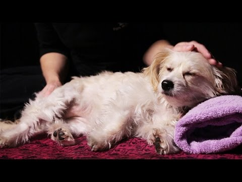 Xxx Mp4 Dogs Get Massages For The First Time 3gp Sex