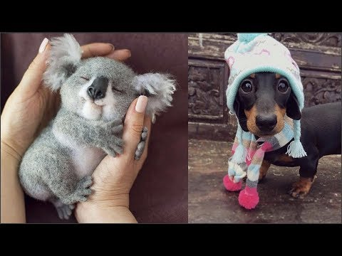 Cute baby animals Videos Compilation cute moment of the animals Cutest Animals 1