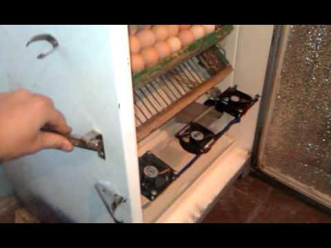 Как сделать лотки для инкубатора из холодильника - Rc-garaj.ru