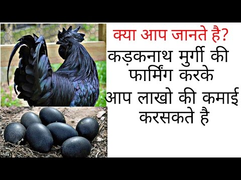 Black Chicken Farming  Business || Earn Great Money Upto ₹50000 Per Month