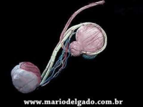 Cirurgia de Vasectomia em 3D Cirurgia sem dor