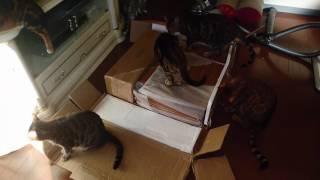 ベンガル猫軍団&ミッキーにお年玉プレゼント
