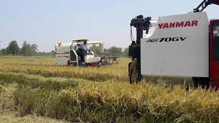 Yanmar vs Kubota vs world star 85