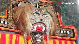 Reog Ponorogo, Pembarong Kondang & Lincah Ngamuk Ngamuk Di Balai Desa Mlarak