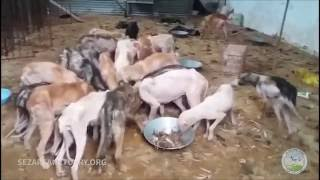 A show of death of dogs in Gilan, Iran