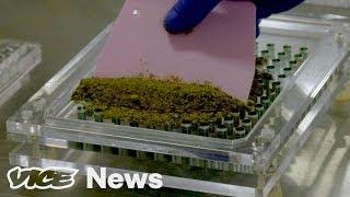 Is Microdosing The Future of Marijuana?