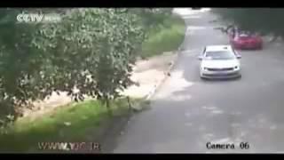 حمله ببر به انسان در پارک وحش پکن
