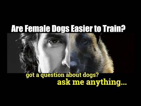 Xxx Mp4 Is The Female Dog Easier To Train Than The Male Dog Training Videos Ask Me Anything 3gp Sex