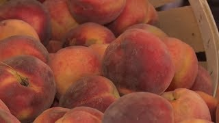 Garden State produces peaches ripe for picking