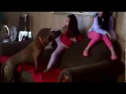 Girls Get Scared By Pitbull Dog