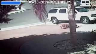 The amazing video of the cat rescuing a four-year-old boy being attacked by a dog.