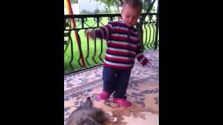 Bardhi vs. Maca (little boy vs. cat)
