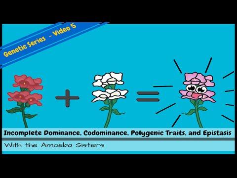 Incomplete Dominance, Codominance, Polygenic Traits, and Epistasis!