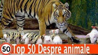 Top 50 Detalii Pe Care Nu Le Stiai Despre Animale