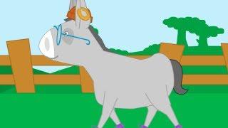 Mon âne