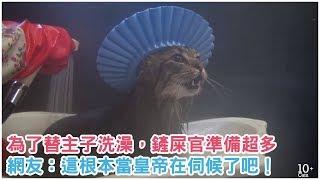為了替主子洗澡,鏟屎官做了超多準備...網友笑噴:「這根本當皇帝在伺候了吧!」
