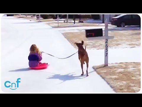 Xxx Mp4 Dog Pulls Little Girl On Sled Girls Best Friend 3gp Sex