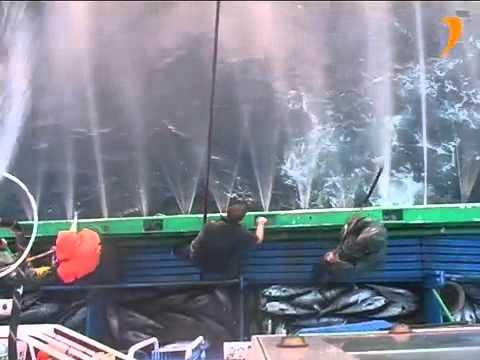 Artes de pesca Cebo vivo para la pesca de bonito