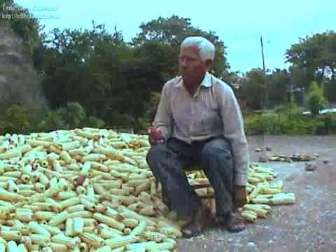 Tierra de Maiz 1 4