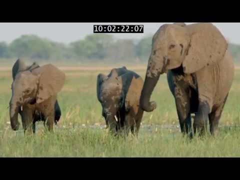 Xxx Mp4 Elephant King Of The Kalahari 3gp Sex