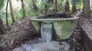 Exploring Ginger Ale Springs in Seminole County