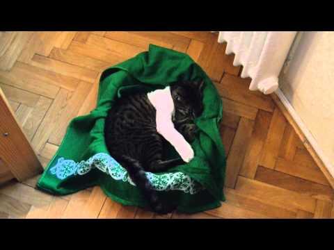Kocica Burcia z Łapą w gipsie
