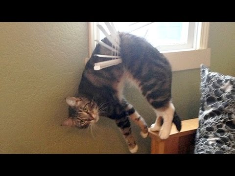 Nothing will make you laugh harder than funny animals Funny animal compilation