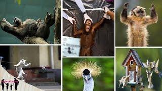 اطلالات روعة في عالم الحيوانات العجيب     (HD)
