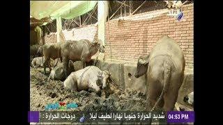 جولة داخل منفذ وزارة الزراعة لرصد أسعار اللحوم والأضاحي