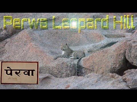 Xxx Mp4 Leopard Hill Perwa Pali Rajsthan 3gp Sex