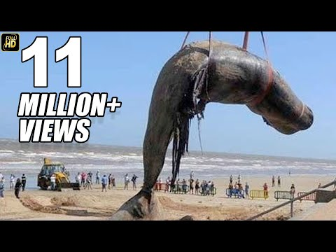 Xxx Mp4 Worlds Biggest Blue Whale Fish At Juhu Beach Mumbai 3gp Sex