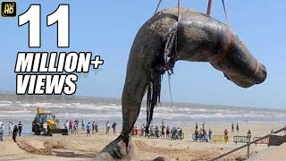 Worlds Biggest Blue Whale Fish At Juhu Beach Mumbai