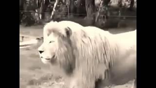 León hablando