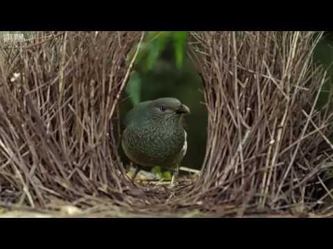 Xxx Mp4 Bird Video Vioceover Sum Fuk Meme GONE SEXUAL 3gp Sex