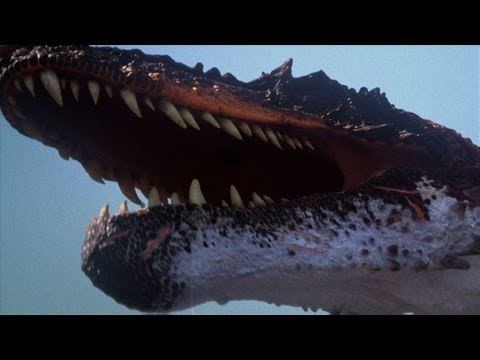 The BEST of Discovery s Dinosaurs
