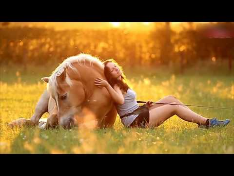 Xxx Mp4 GIRL AND HORSE GREAT BOND Caught On Camera 3gp Sex