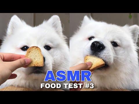 Xxx Mp4 ASMR Dog Reviewing Different Types Of Food 3 I MAYASMR 3gp Sex