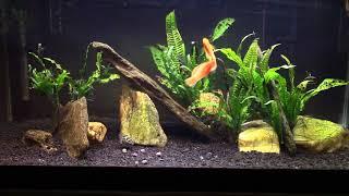 Discussion About Keeping A Brackish Aquarium