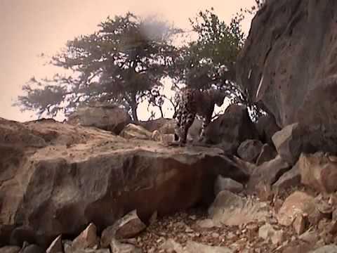 Xxx Mp4 Pure Nature Specials Arabian Leopard Of Oman 3gp Sex