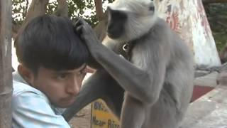 Friendship of a langoor (Baboon) and Boy