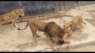 Cristão é jogado em cela com animais ferozes e sai ileso