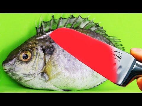 Xxx Mp4 EXPERIMENT Glowing 1000 Degree KNIFE VS PIRANHA FISH 3gp Sex