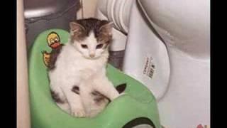 104 śmieszne koty i kotki