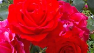 Aayegi Har Pal Tujhe Meri Yaad [Full Song] (HD) With Lyrics - Andolan
