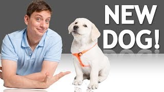 3 Easy Ways to Know if You're Ready for a New Dog