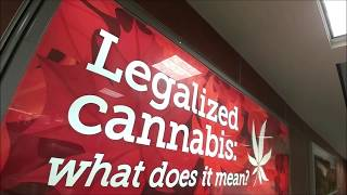 Legalized Cannabis What Does It Mean
