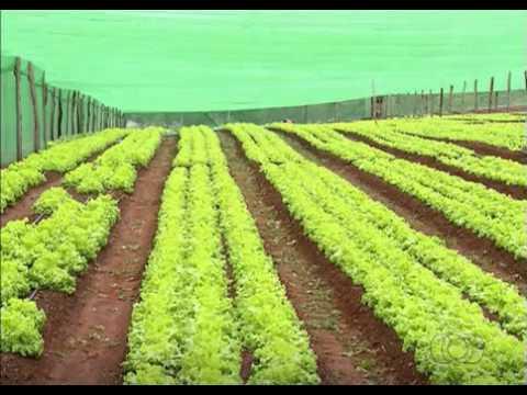 Central de Negócios da Agricultura Familiar incentiva desenvolvimento do setor. BD TO - 18/02/2016